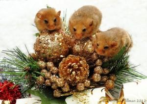 Moscardini_Natale